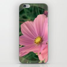 Wild flower in pink iPhone & iPod Skin