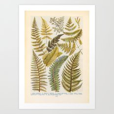 Vinatge Fern Illustration Art Print