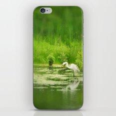 Marsh Egret 2 iPhone & iPod Skin