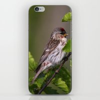 Good Morning Tweety! iPhone & iPod Skin
