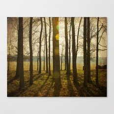 Afternoon Sunlight with Lens Flare Canvas Print