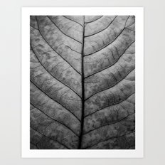 Leaf Veins Art Print