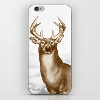 White-tailed Stag 2 iPhone & iPod Skin