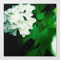 Oak leaf hydrangea flower Canvas Print