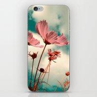 cosmos flowers II iPhone & iPod Skin