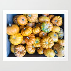 Pile of Mini Pumpkins for sale Art Print