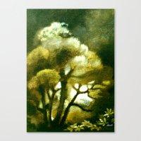 Spirit of the Tarairi Tree Canvas Print
