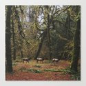 Rainforest Elk Canvas Print