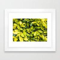 Too Much Green Leaves Framed Art Print