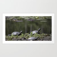 Family of Turtles Art Print