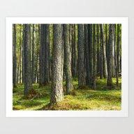 Forest II. Art Print