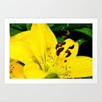 Spider in Flower After Rain Art Print