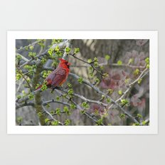 His Majesty the Cardinal Art Print