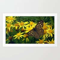 Speckled Wood Art Print