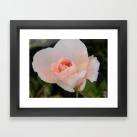 rainy flower Framed Art Print