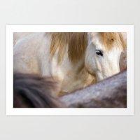 Camargue Horse portrait 6827 Art Print