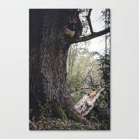 Oak Tree Canvas Print