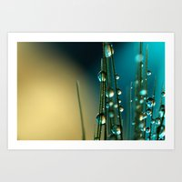 Grass Seed With Blue Art Print