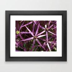 Purple star alium Framed Art Print