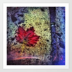 Fall Maple Art Print