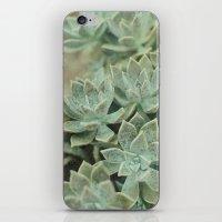 Botanical Graptopetalum Paraguayense in Jade and Antique Gold iPhone & iPod Skin