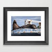 Sea Lion In The Puget So… Framed Art Print