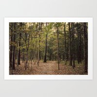 In the Woods 1 Art Print