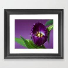 tulip flower  , tulip flower  games, tulip flower  blanket, tulip flower  duvet cover, Framed Art Print