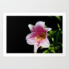 Big Lily Art Print