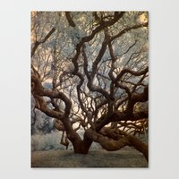 Florida Tree Canvas Print