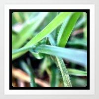 Grass. Art Print