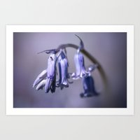 Bluebell Flower Art Print