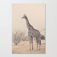 G is for Giraffe Canvas Print