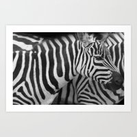 Stripes In A Line... Art Print