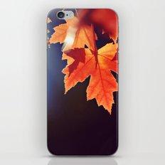 Maple Morning iPhone & iPod Skin
