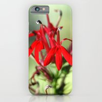 Cardinal Flower iPhone 6 Slim Case