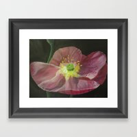 Red Poppy Framed Art Print