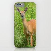 Deer On Edge Of Field iPhone 6 Slim Case