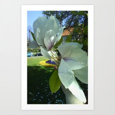 Magnolie Art Print