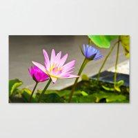 Lotus Flower Morning Canvas Print