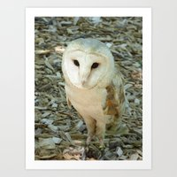 owl 2016 II Art Print