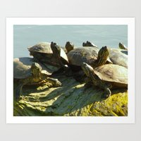 Turtles 1 Art Print