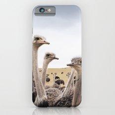 Ostriches iPhone 6 Slim Case