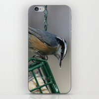Red-breasted Nuthatch iPhone & iPod Skin