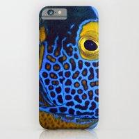Blue-faced Angelfish iPhone 6 Slim Case