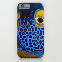 Blue-faced Angelfish iPhone 6 Slim Case