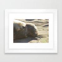 Elephant Seal: Contemplation Framed Art Print
