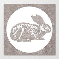 In Which A Rabbits Anato… Canvas Print