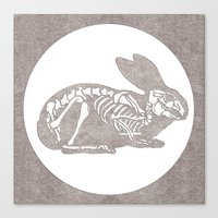 In which a rabbits anatomy is observable  Canvas Print