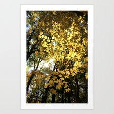Golden Leaf Canopy Art Print